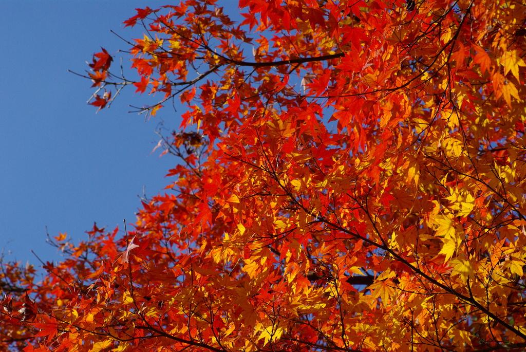 職場付近の紅葉
