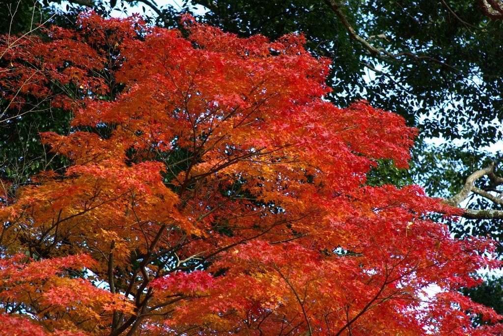 通りすがりの神社の紅葉