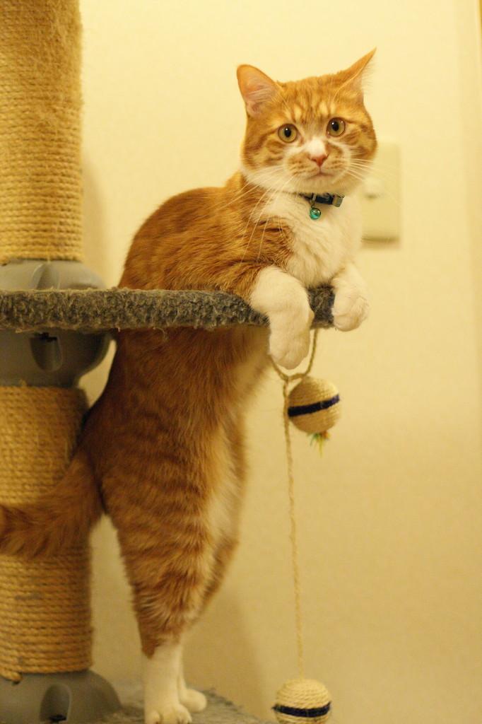 猫背の矯正