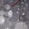 雪のざわめき