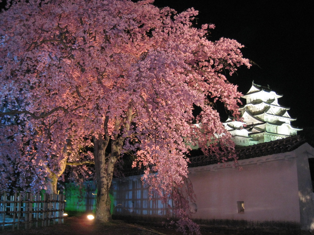 姫路城と八重桜