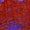 紅葉(HDR)