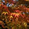 原谷の紅葉