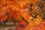 キャンプ場の紅葉