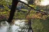 弁天橋公園の池