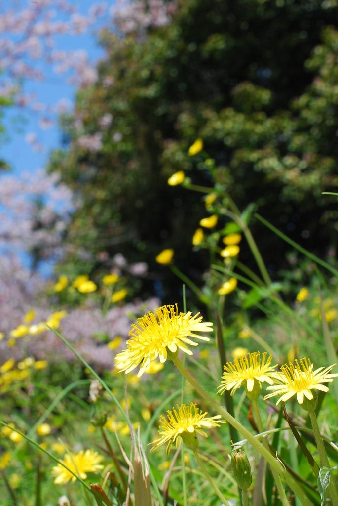 野に咲く花もいいですね~!!