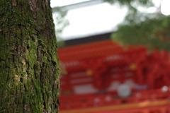 氷川神社②