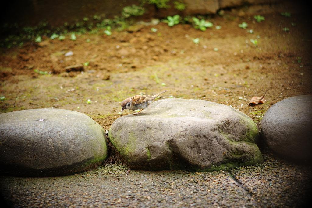 湯島天神の雀