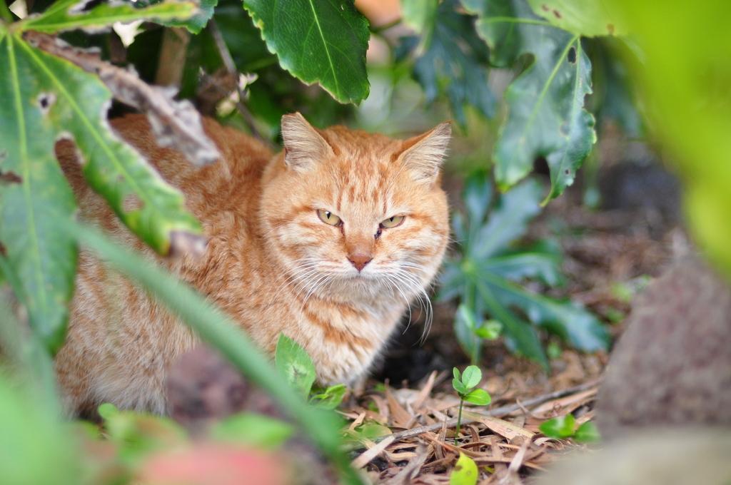 庭先のネコ