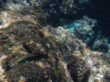 八丈島の海3