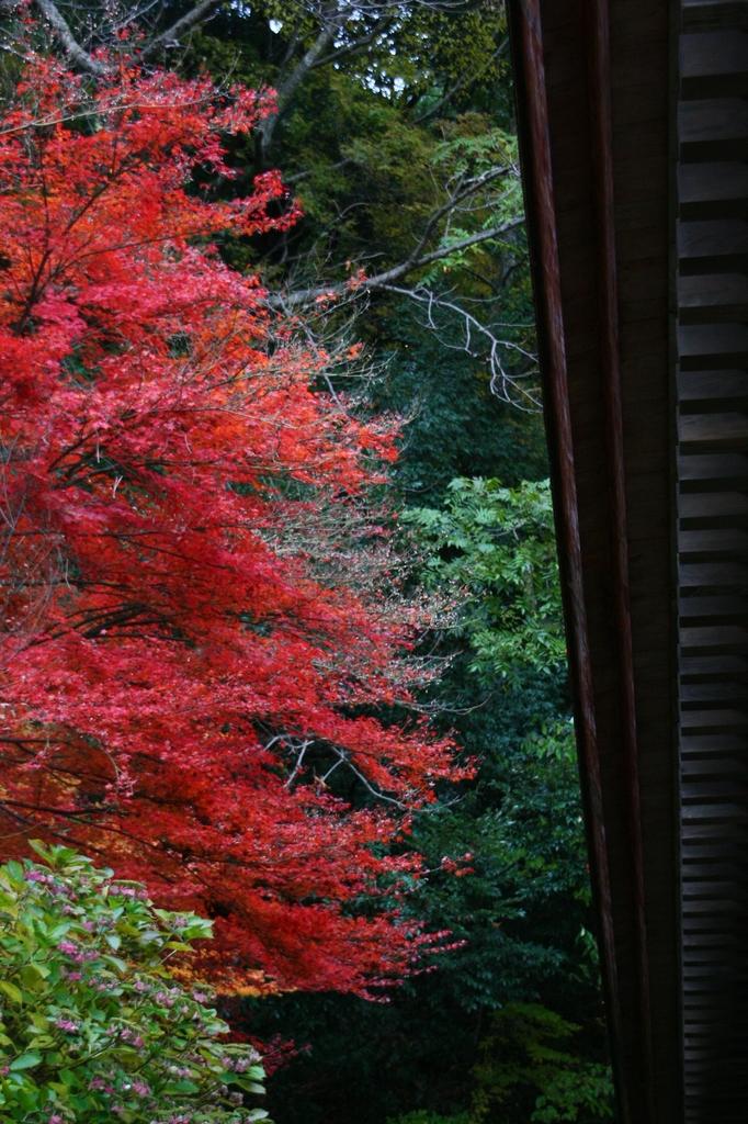 清水寺の秋