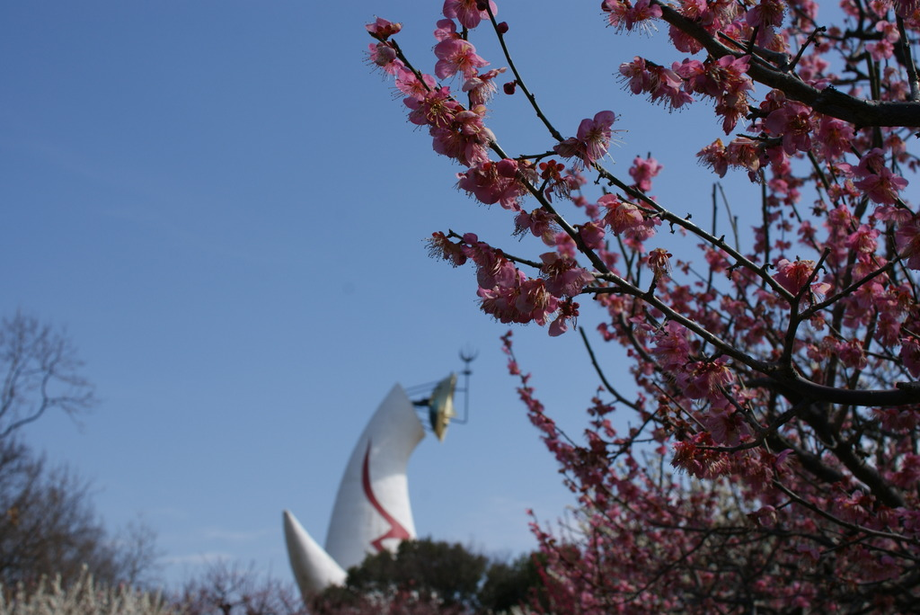 万博と梅祭