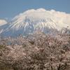 富士山と桜。