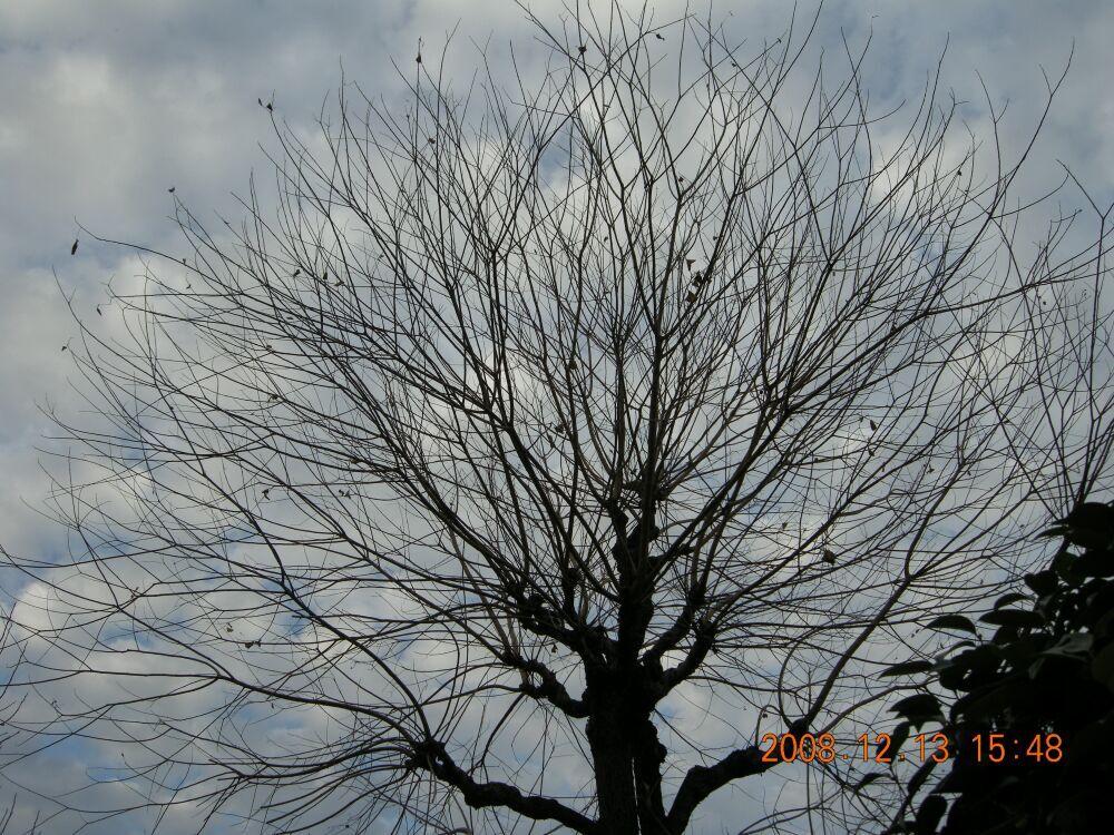 空に映える樹木