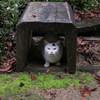 好古園の猫
