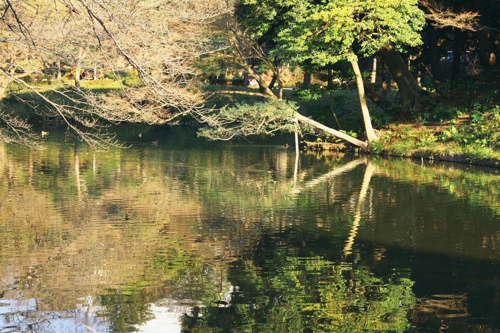 小石川後楽園090117 V