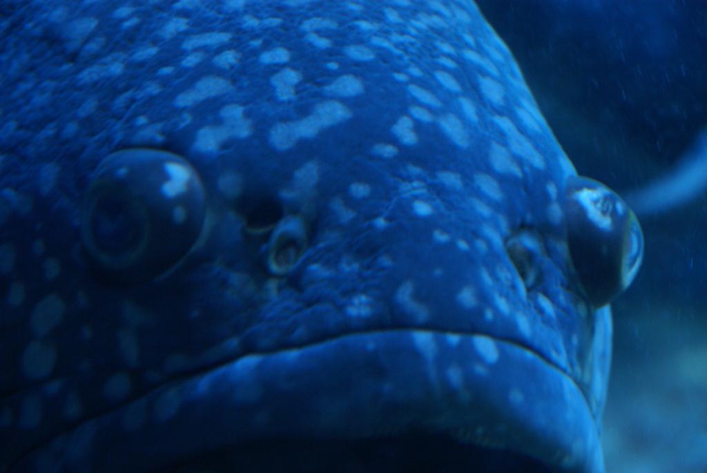 魚1(名前不明)