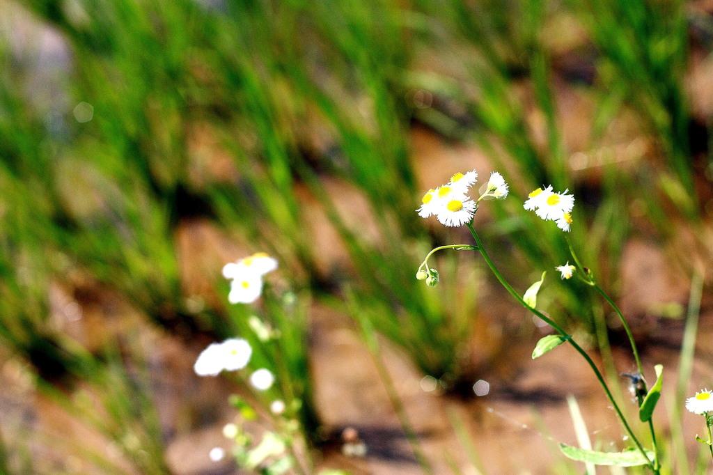 田んぼに咲く花
