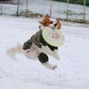 雪中ディスク♪