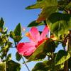南国の花と空