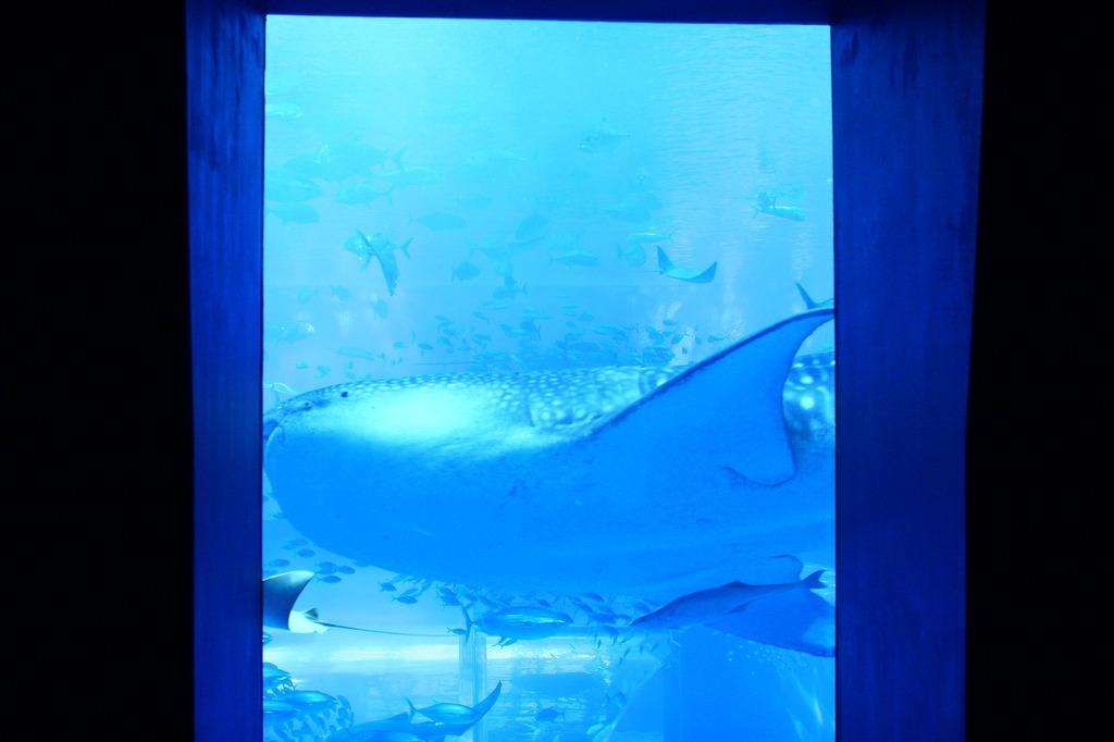 窓にはジンベイ