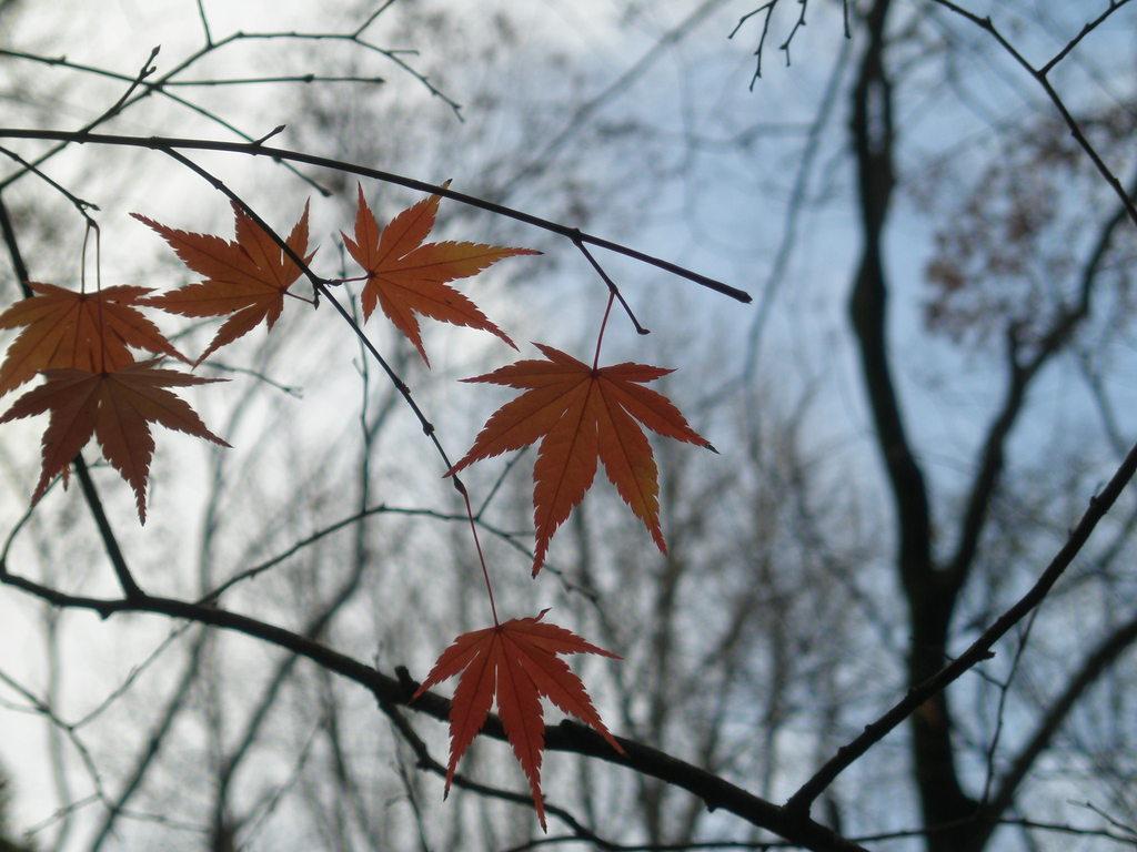 糺ノ森の秋