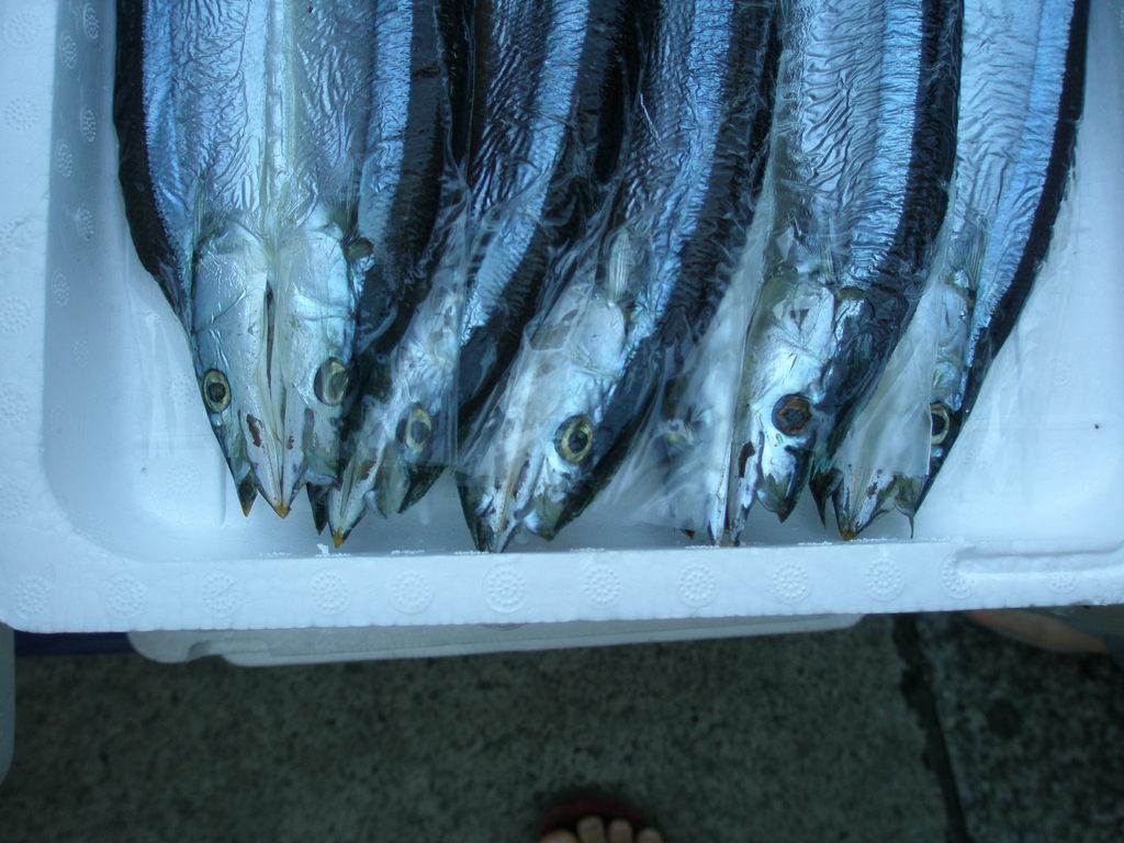 葉山秋刀魚