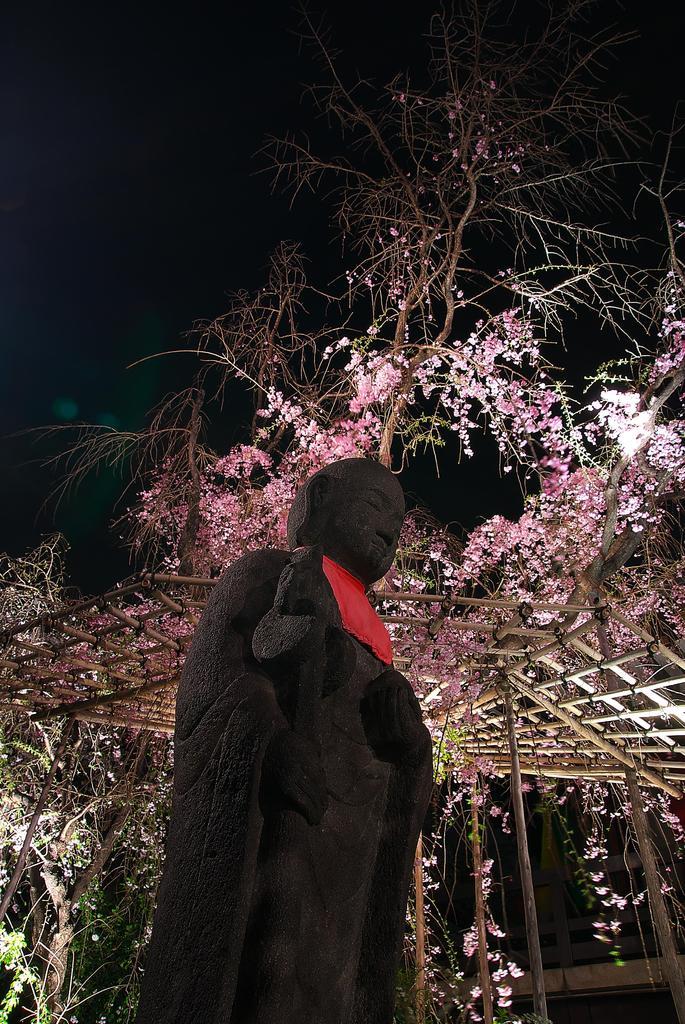 桜のある夜の風景