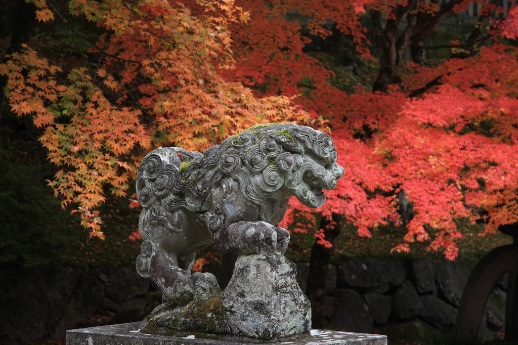 錦秋の狛犬