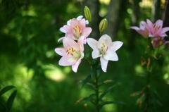 森の中に咲く