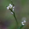 小さな花 part-1