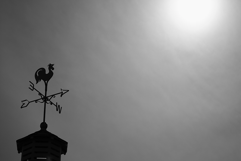 太陽に向かってコケコッコー