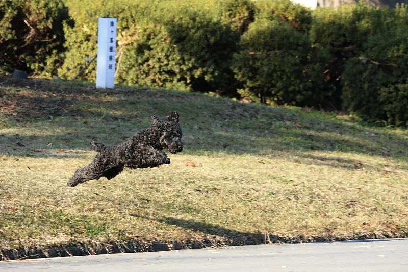 dog_jump