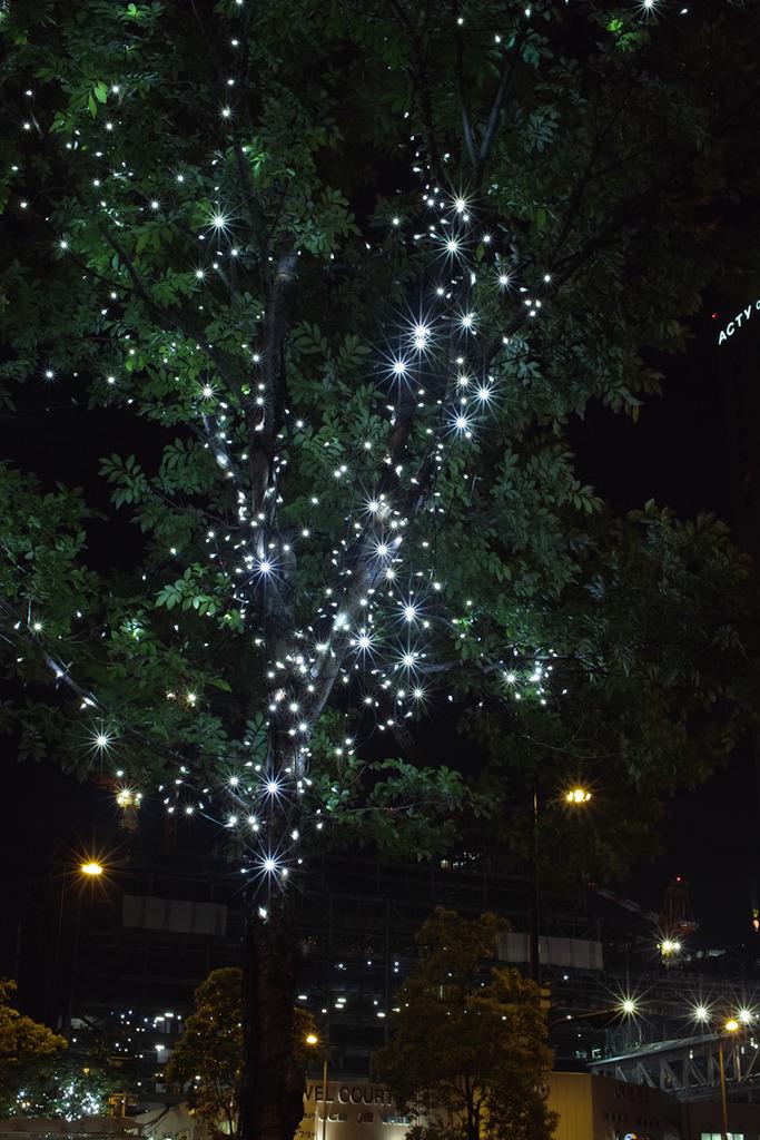 木に輝く星