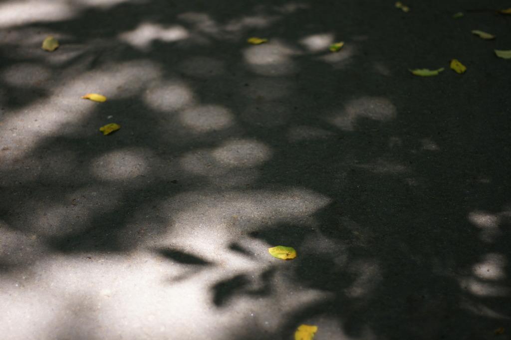 木もれ日の丸ボケ