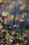 秋の終わりに