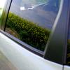 車に映える菜の花畑