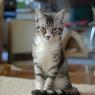 NIKON NIKON D60で撮影した動物(DSC_0491)の写真(画像)