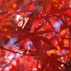 OLYMPUS E-420で撮影した(赤)の写真(画像)