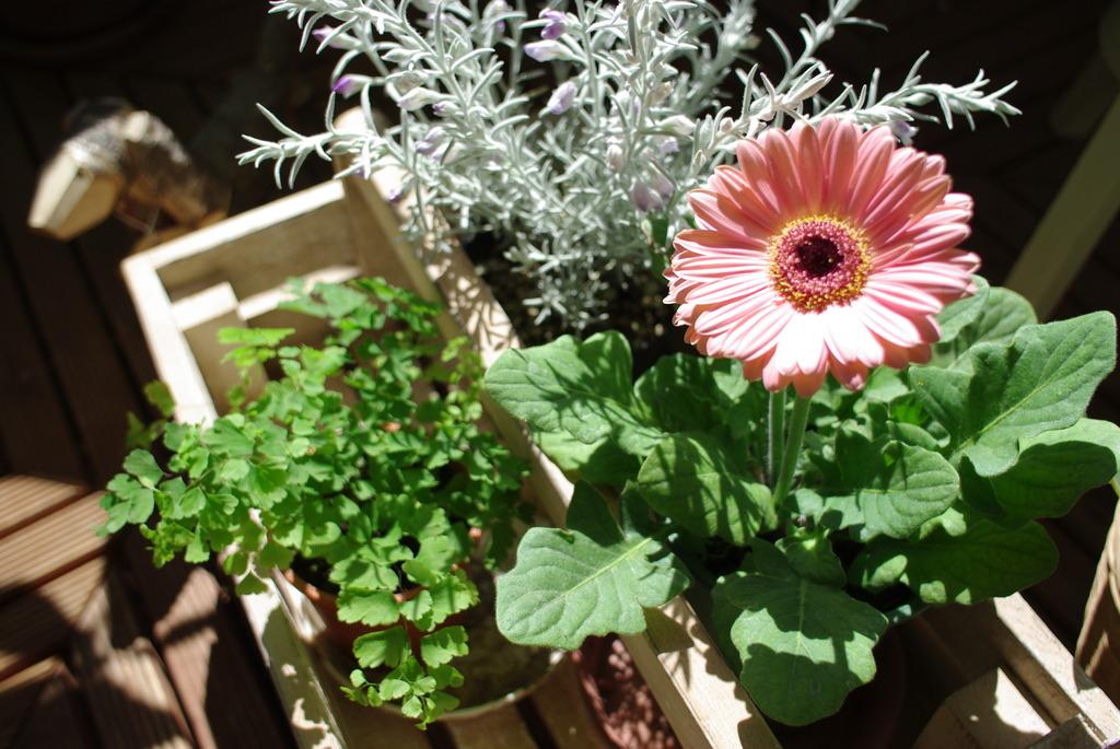 Across mini garden