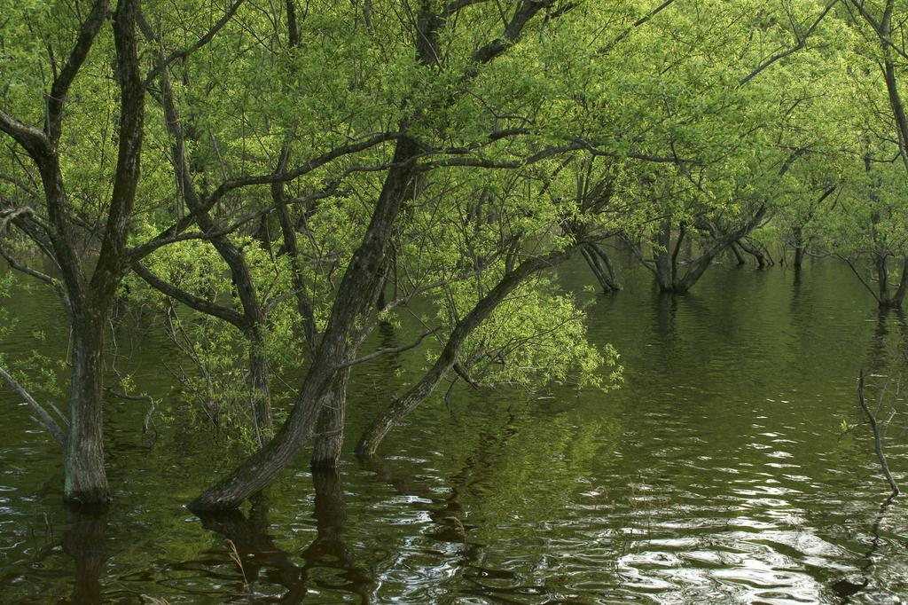 春緑の映る池