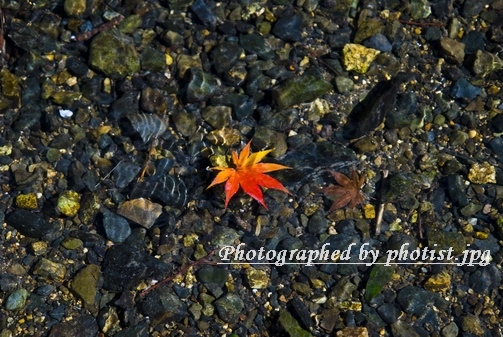 Autumn in Kyoto 2008 008