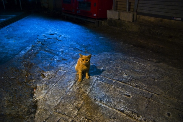Cat in Naha 002