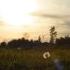 荒野の一輪