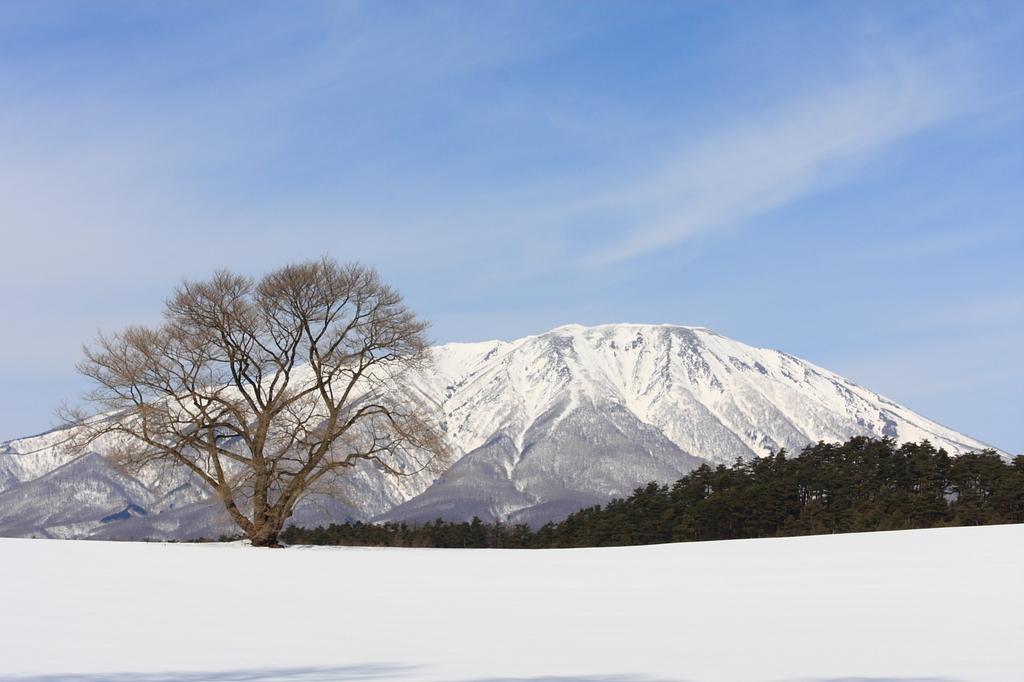 冬の一本桜と岩手山