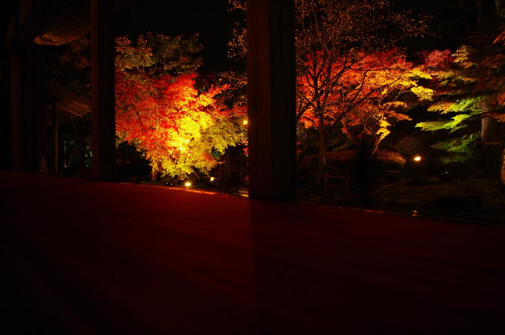 松島は円通院紅葉ライトアップ