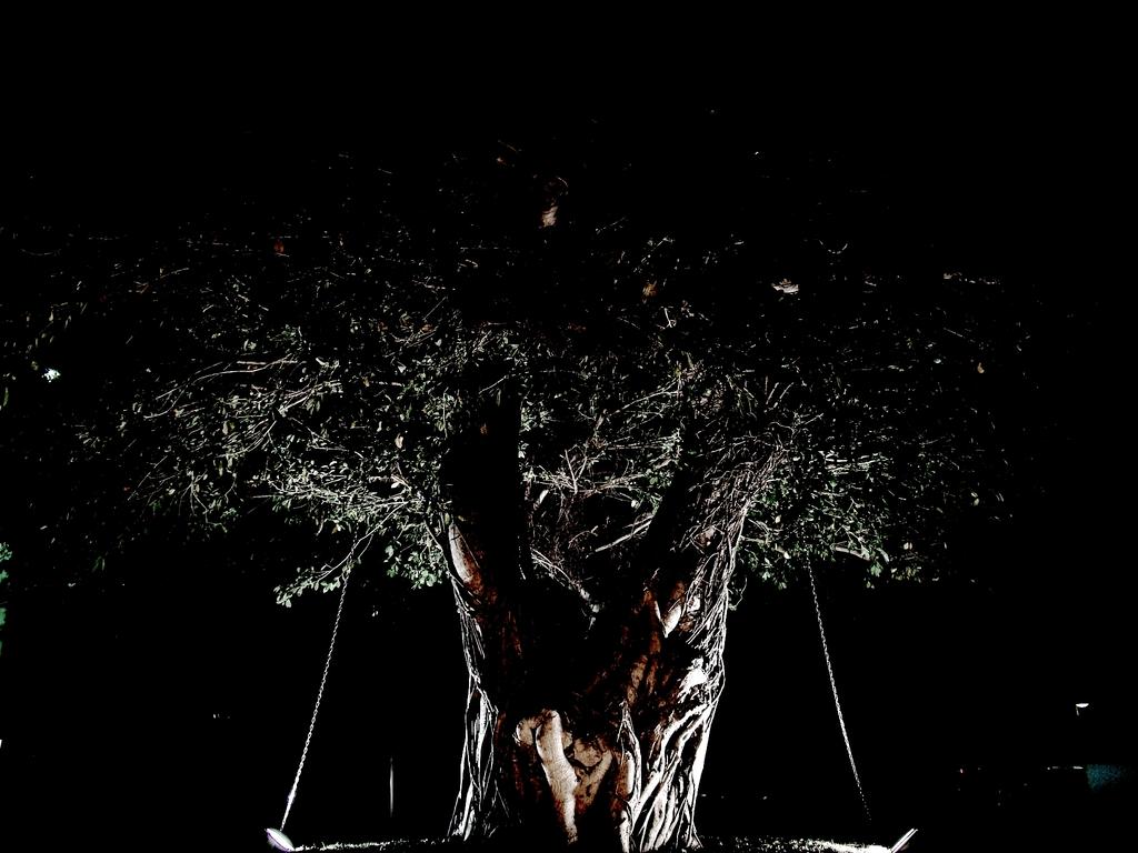 捕われの大木