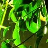 Rainy Green