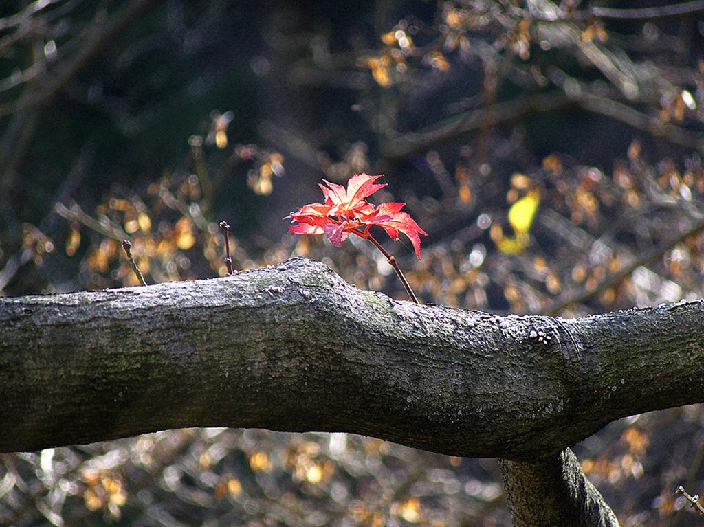 名残の紅葉