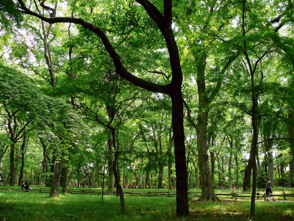 林を往く人々